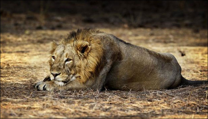 Cecil the lion's son, Xanda, shot, killed in trophy hunt
